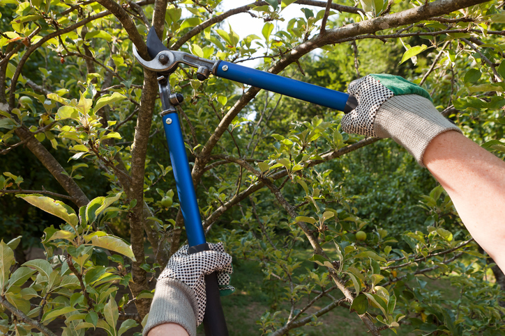 Jardinier avec un coupe-branche